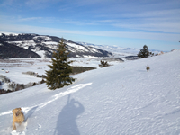 Backcountry Skiing With Moose, the dog.